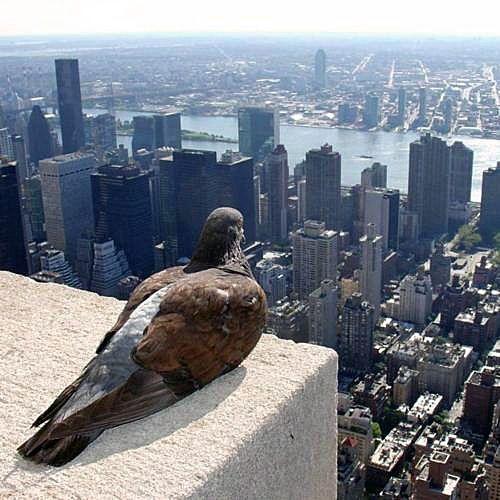شركة مكافحة الطيور